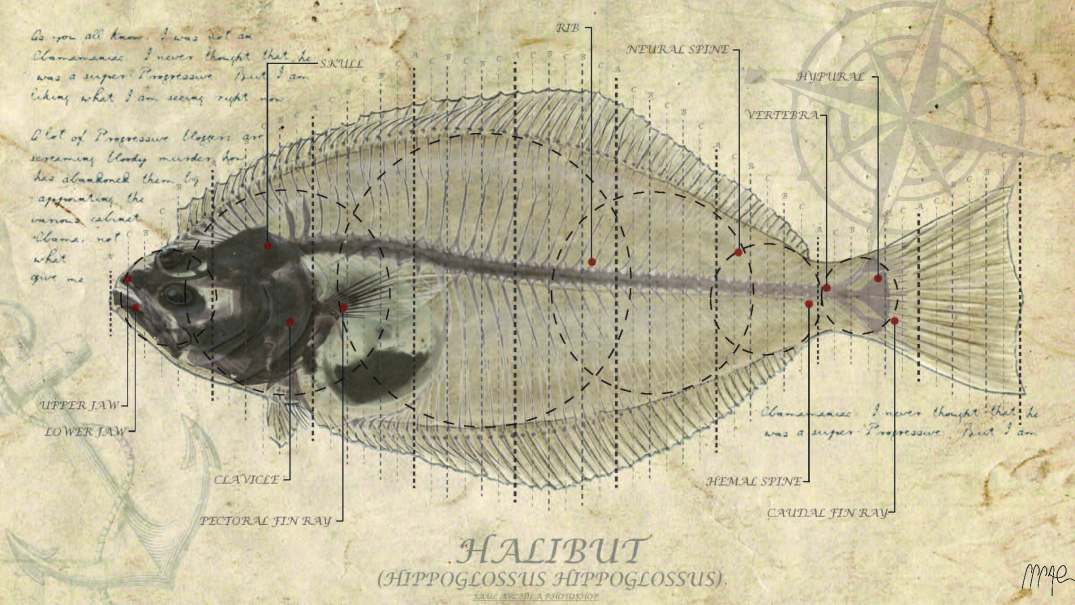 HALIBUT FISH ANALYSIS
