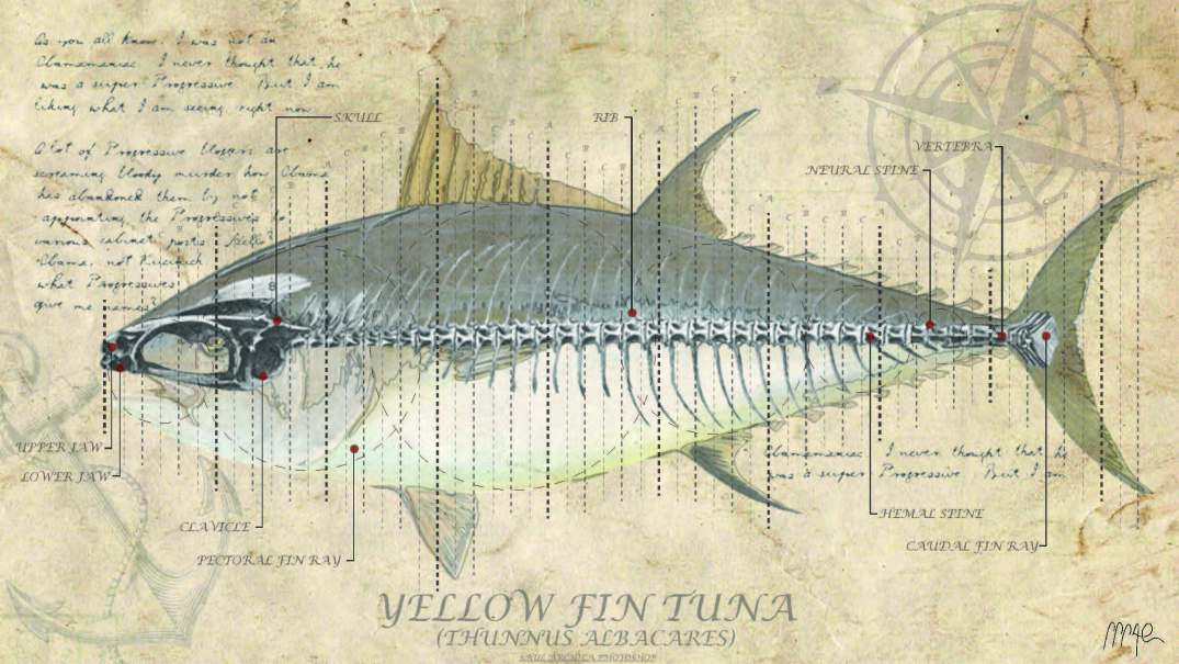 YELLOW FIN TUNA FISH ANALYSIS