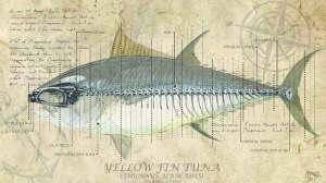 Tuna Study Final