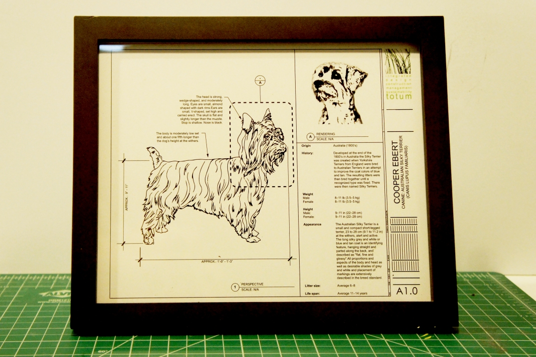 AUSTRALIAN SILK TERRIER DOG CUSTOM BLUEPRINT FRAMED PHOTO